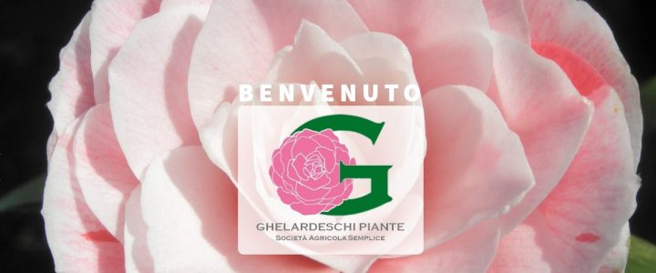 Ghelardeschi Piante Sito WEB 2018-2019