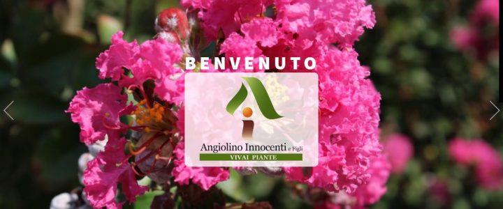 Sito WEB Innocenti Angiolino & Figli